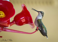 Humming Bird at Home (Kay Martinez) Tags: hummingbird bird summer