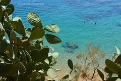 Skikda Beach - Algeria (khalid.lebdioui) Tags: beach sun summer figuesdebarbaries prickly pear nikon d5200 dzflickrs flickraward flickr flickrestrellas