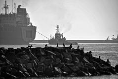 Maritime Scene (mlbp372) Tags: ruegen rgen mukran port hafen sassnitz swan fairplay27 tug ship schiff halbtauchschiff schwergutschiff semisubmersible schlepper
