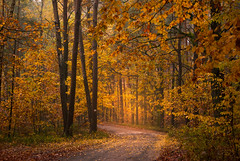 Autumn Saga Continues (Łukasz Babula) Tags: poland autumn fall october wood woods forest tree trees foliage nature natural orange red yellow plant landscape outdoor countryside colours road trail path nikon d60 nikkor 1855 morning calm peaceful serene fog foggy mist