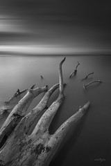 The Abandon Hand (Martin Yon) Tags: martinyon blackandwhite hand beach solitude bw seascape monochrome fineart