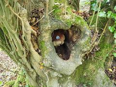 hole in tree (debs-eye) Tags: devilsdyke southdowns holeintree