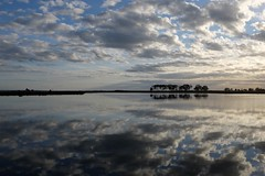 Water and sky (Hone Morihana) Tags: westerntreatmentplant shorebirds migratorybirds