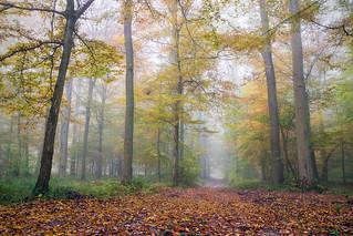L'automne en Halatte