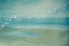 flow (borealnz) Tags: blur beach birds surreal longexposure sea nz newzealand abstract nature art painterly