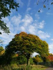P1550494 (Imagine Bill) Tags: pypehayes beech birmingham westmidlands