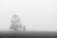 (Femme Peintre) Tags: baum nebel natur outdoor schwarzweis