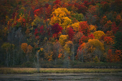 Beauty of Quebec !! (Photography by Ramin) Tags: fall gatineau park quebec beauty nature trees golden red autumn colours green beautifull landscape canada canadian 2016 october ngc