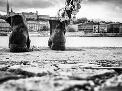budapest (coPhoto_) Tags: budapest ungheria viaggio blackwhite city città
