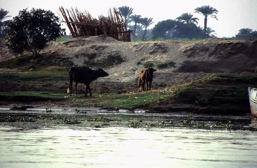 "Ägypten 1999 (471) Luxor: Felukenfahrt zur Gezira el-Mozh (Banana Island) • <a style=""font-size:0.8em;"" href=""http://www.flickr.com/photos/69570948@N04/30580139010/"" target=""_blank"">View on Flickr</a>"
