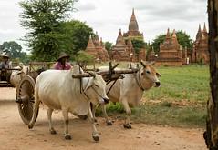A cloudy day in Bagan, Myanmar (Burma) (Daniël den Toom) Tags: bagan myanmar birma burma pagan old temple animal land farmer temples unesco 2016 cloudy clouds locals