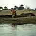Ägypten 1999 (469) Luxor: Felukenfahrt zur Gezira el-Mozh (Banana Island)