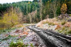 post industrial (1) (grahamrobb888) Tags: nikon nikond800 nikkor50mmf18 birnamwood perthshire scotland autumn frost forest forestry footpath track