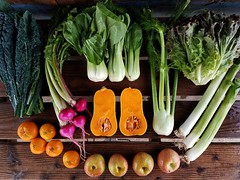 Suzie's CSA Box, Week of Nov. 14 - 20