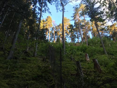 2016.07.14 012 Lendorf Kärnten