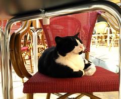 Compañero de mesa (pibepa) Tags: gato silla fotomovil movil bq