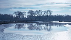 The first ice on the lake (marielledevalk) Tags: biesbosch dutch holland cold blue lake outdoor ice fall autumn reflection