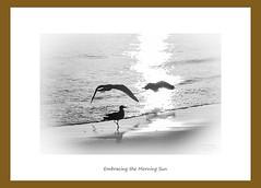 _MG_3850 (White Balance Imaging Photography) Tags: beachocean fallautum nature norfolk oceanview places seasons virginia weather