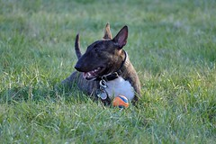 P1070676b - Sammy (JB Fotofan) Tags: hund dog tier animal sammy outdoor lumixfz1000
