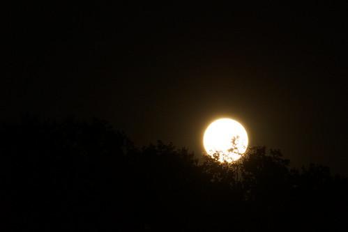 Moon behind leafs