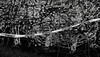 Nativity Scene, Portland (austin granger) Tags: lines warning portland reindeer pattern chaos christmaslights madness mind caution repetition grotto pollock nativity scramble nativityscene dendrites gf670 austingranger