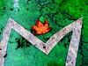 P3470208 foglòie  morte  !! (gpaolini50) Tags: art foglie photography colore arte creative photographic explore photoaday autunno emotive composizione emozioni explora photographis explored esplora creattività phothograpia
