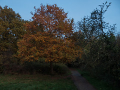Dusk, Monken Hadley Common