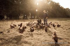 2015_10_12_Krust_0376.jpg (Christian.Patrick) Tags: alsace production poule ferme lieux oeuf hautrhin krust eteimbes fermedeloréedubois