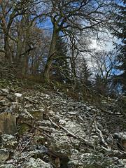 Winterspaziergang Mörschieder Burr_0010ajpg (AndreasHerbert) Tags: mörschied mörschiederburr nationalparkhunsrückhochwald