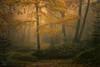 Dun Dubh V (GenerationX) Tags: autumn trees mist leaves landscape scotland unitedkingdom scottish neil gb prints trossachs spiderwebs barr aberfoyle thenarrows lochard queenelizabethforestpark achrayforest canon6d laraich dondubh