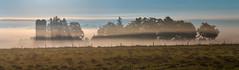 Foggy morning farmstead (virgil martin) Tags: panorama ontario canada fog barn sunrise landscape farm gimp elora wellingtoncounty grandrivervalley microsoftice oloneo olympusomdem5