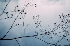 (Pedro Galdino) Tags: valedalua chapadadosveadeiros