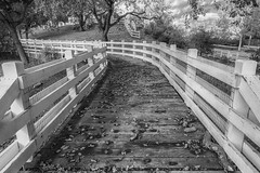 RHM_0049-HDR-1192-1193.jpg (RHMImages) Tags: bridge trees blackandwhite bw fall monochrome leaves fence landscape pleasanton alvisoadobe