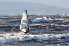 PC311782-Edit (Brian Wadie Photographer) Tags: gulls oystercatcher windsurfing kiting em1 goodlight 14xtc avonbeach canon70300lis hemgistburyhead