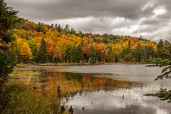 It is all about colours! (Mala Gosia) Tags: kajtek malagosia oct122016 kennisislake nearalgonquinpp ontario canada outdoor lake trees bush leaves colours canoneos6d landscape water serene foliage plant