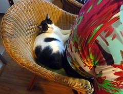 Nadia and Namast, watercolor class - DSC04298 (Dona Mincia) Tags: art people animal cat seated chair humanfigure arte pintura aquarela class aula cadeira gato sentado