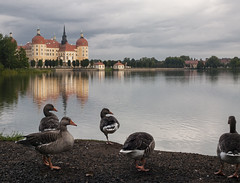 En los alrededores de Moritzburg scloss. (RosanaCalvo) Tags: alemania moritzburg agua animal animales castillo patos reflejos schloss
