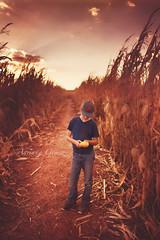 dying crop (Adriana Gomez (Adriana Varela)) Tags: boy child outdoors corn cornmaze crop farm wonder dreamy plants earth nature childhood