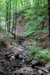 Creek in the forest (Majorimi) Tags: canon eos 70d digital color colorful nice hungary forest tree green path nature light leaf creek hill cliff stream