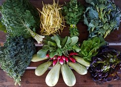 Suzie's CSA Box, Week of Oct. 10 - 16