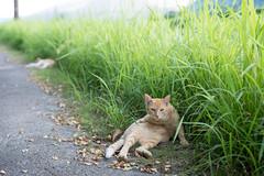 猫 (23fumi@fuyunofumi) Tags: d600 nikon cosina nokton voigtländernokton58mmf14slⅱ 58mm bokeh cat grass dof ニコン ノクトン フォクトレンダー 猫 ねこ