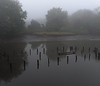 PA060042 (Paul Henegan) Tags: 67crop hackensackriver autumn foggymorning reflections woodenpilings stealingshadows