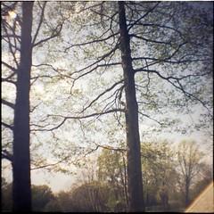 (Lana Mayakovskaya) Tags: film analog lomo lomography lofi park trees squareformat dianamini nature
