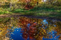 161010-04 Couleurs d'automne (clamato39) Tags: basepleinairdestefoy villedequbec provincedequbec qubec canada reflection reflet autumn automne eau water
