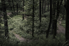 forest (lenospace) Tags: germany photo photography nature tree leaves branch stairs high wood green dark shadow fine great fantastic exciting trip day possibility up mountain lenospace true really ideally super