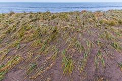 After the Storm Surge (fotofrysk) Tags: stgeorgesbay ocean bay offtheatlantic sand dune grass dunegrass water waveseastcoasttrip canada novascotia antigonish jimtown nikond7100 201610317895