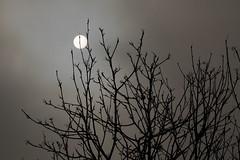 Eine fahle Dezembersonne hinter Hochnebel - Pale December sun behind low stratus (riesebusch) Tags: berlin garten marzahn