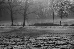 Les petits matins frais (nathaliedunaigre) Tags: nb bw blackwhite paysage landscape brume mist misty brumeux gele frost froid cold campagne country arbres trees