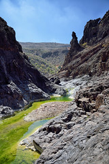 Algea river at Wadi Dirhor 2 (indomitablemachine) Tags: dirhor wadi algea canyon firmhin green island river socotra yemen hadhramautgovernorate ye