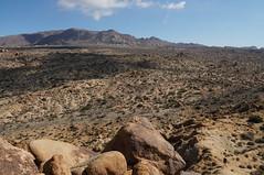 view from Mastodon Peak (rovingmagpie) Tags: california joshuatreenationalpark joshuatree mastodonmountainloop mastodonmountain someguy desertforests df2016